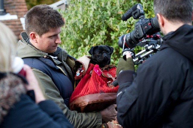 Photo - Petula in rucksack